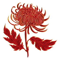 Crysanthemum fire like flower
