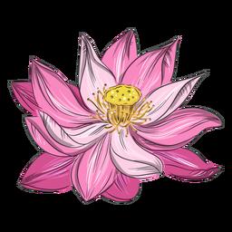 Bonita flor rosa chinesa