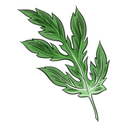Green chinese crysanthemum leaf