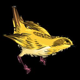 Kopf runter gelber Fliegenfänger Vogel