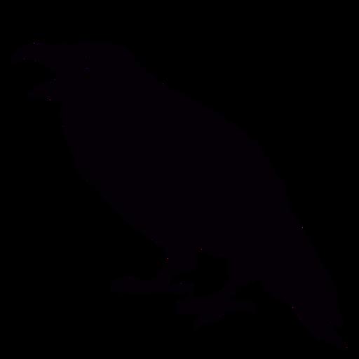 Mouth open raven bird