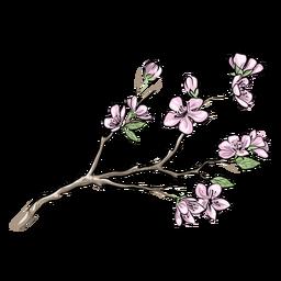 Flores de ciruela bastante chinas