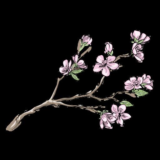 Pretty chinese plum flowers