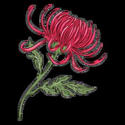 Bonita flor de crisantemo rojo