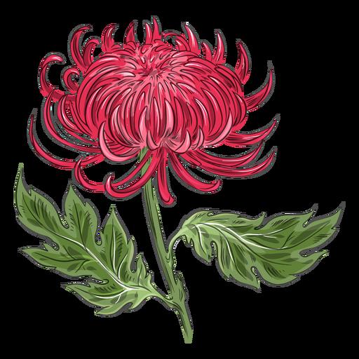 Flor de crisantemo rojo hermosa