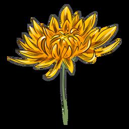 Yellow crysanthemum flower