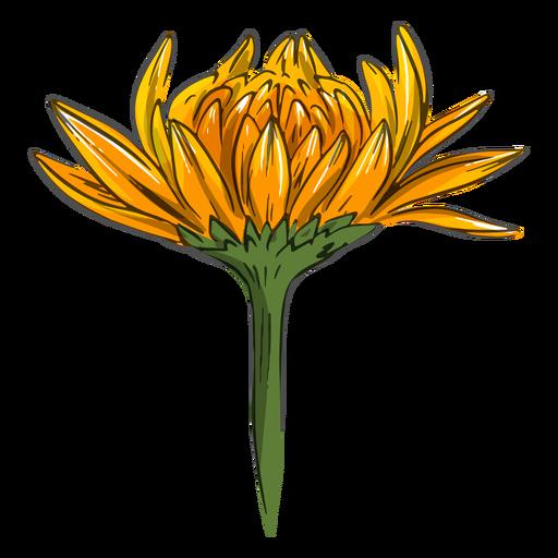 Yellow crysanthemum flower cool Transparent PNG