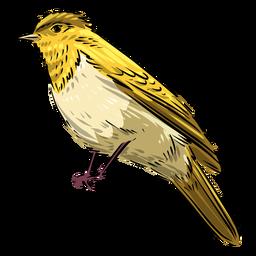 Pájaro papamoscas amarillo