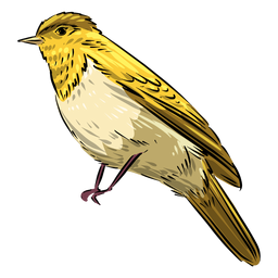Yellow flycatcher bird