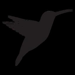 Beija-flor animal preto