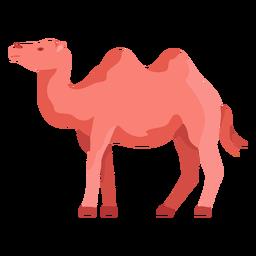 Ilustração de camelo