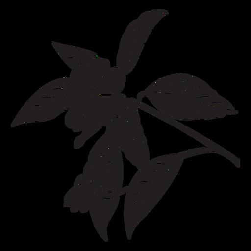 Flores planta negro