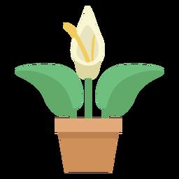 Linda planta de anthurium