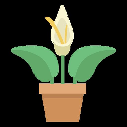 Cute anthurium plant Transparent PNG