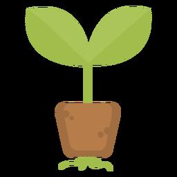 Raízes de plantas fofas
