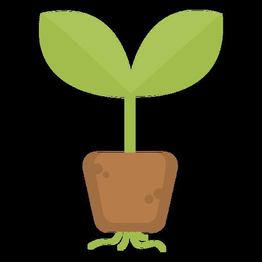 Raíces de plantas lindas