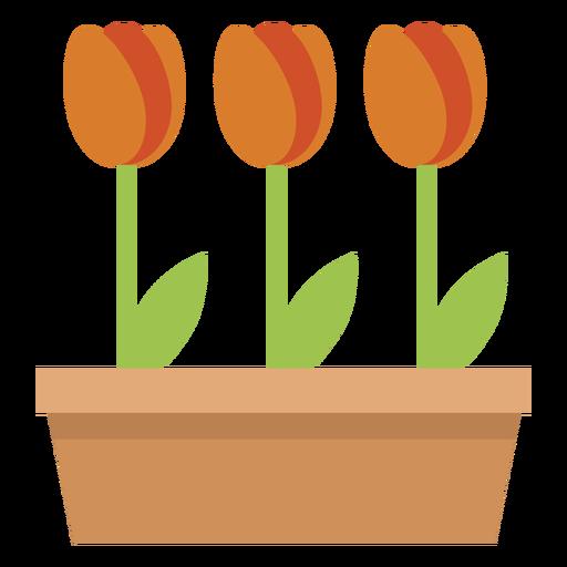 Cute tulips plant