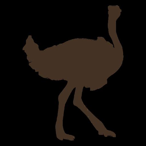 Avestruz silueta vista lateral