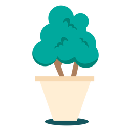 Planta lindo bonsai