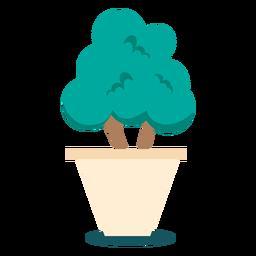 Plantar bonsai bonito
