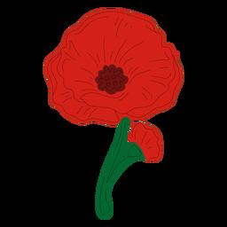 Delicate poppy flower