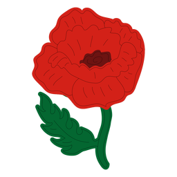 Poppy flower front view