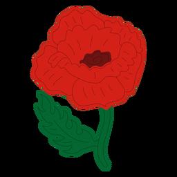 Vista frontal de la flor de amapola