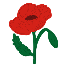 Poppy flower hand drawing
