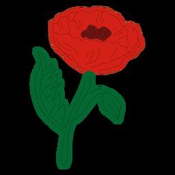 Red poppy flowe