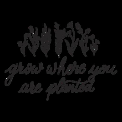 Letras de cita inspiradora Transparent PNG