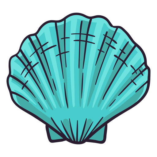 Seashells bay scallop hand drawn