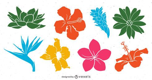 Colorful Tropical Flower Pack