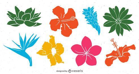 Paquete colorido de flores tropicales