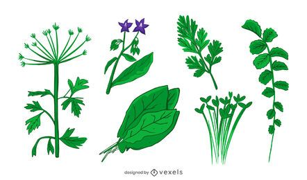 conjunto de ilustración de hierbas