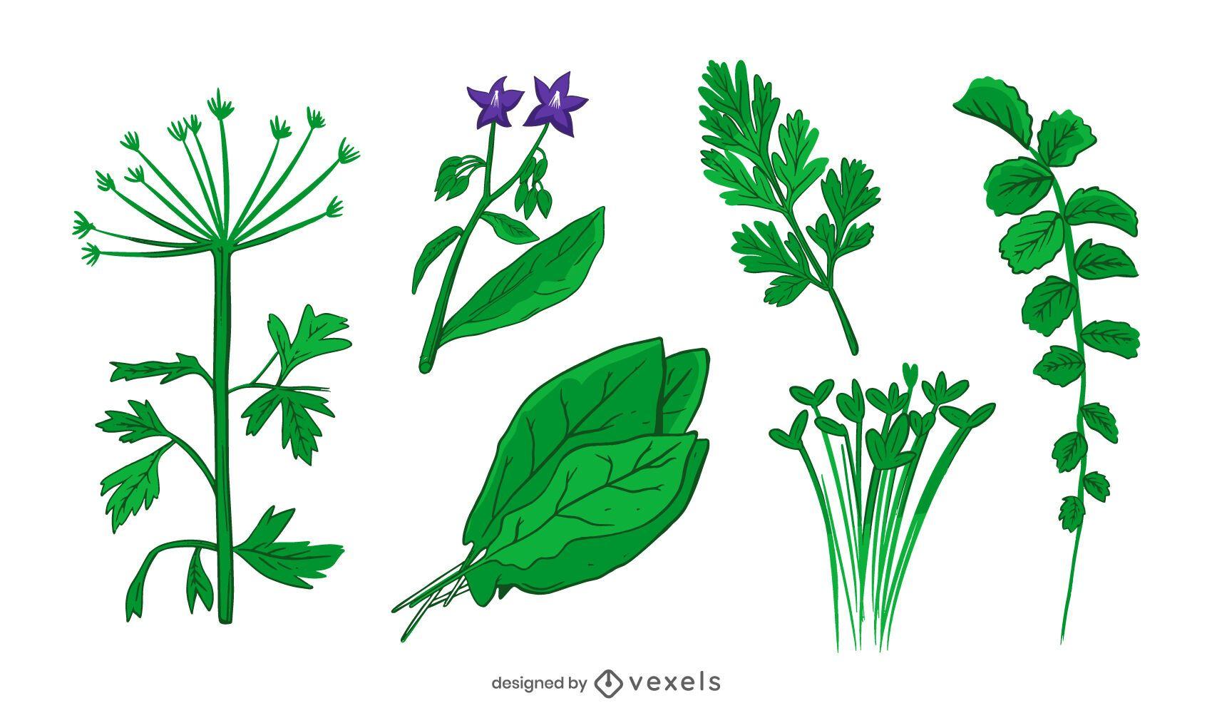 conjunto de ilustraci?n de hierbas