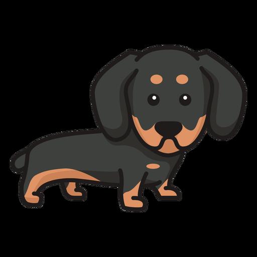 Colored cute dachshund