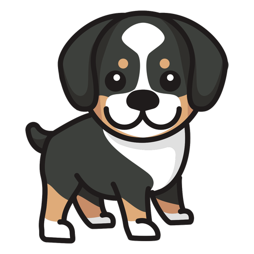 Colored cute dog collie