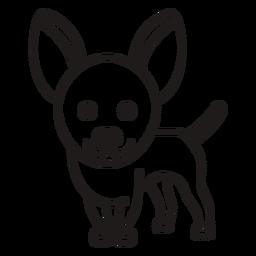 Cute chihuahua dog stroke