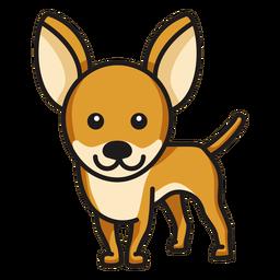 Chihuahua colorido bonito