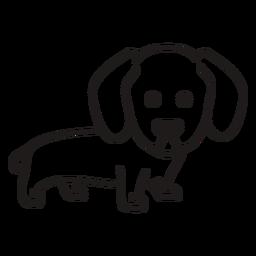 Cute dachshund stroke