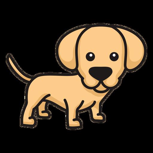 Cute labrador puppy colored