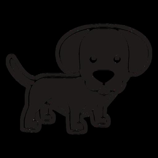 Cute puppy black