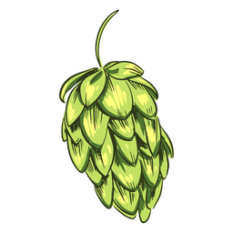 Green hops drawn