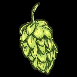Lúpulo verde dibujado
