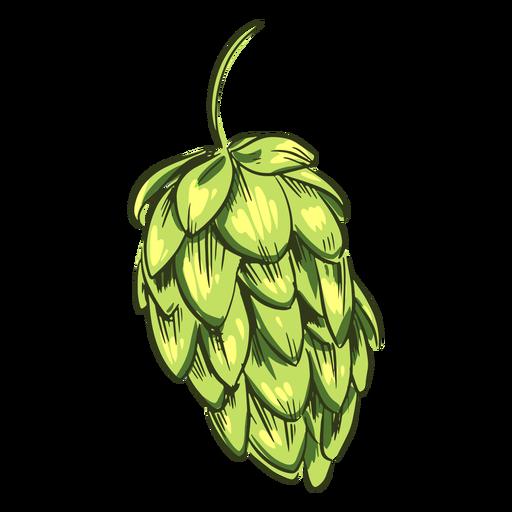 Lúpulo verde desenhado