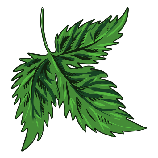Green leaf drawn