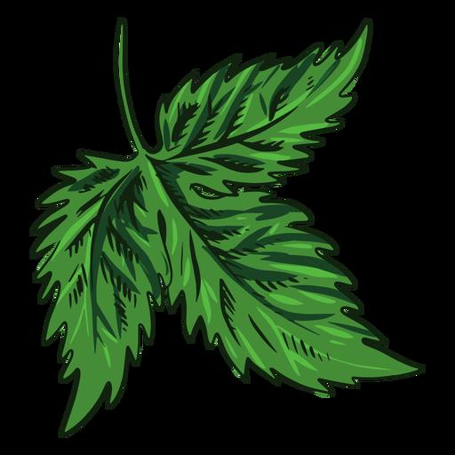 Hoja verde dibujada