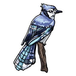 Realistic hand drawn bird blue jay
