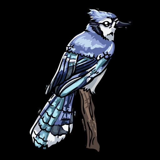 Realistic hand drawn bird blue jay