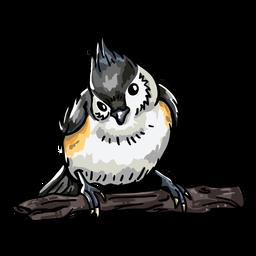 Vista frontal de pájaro realista dibujado a mano